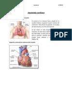 Anatomía cardiaca