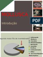 aula 2 - Mollusca-Introdução e primeiras classes