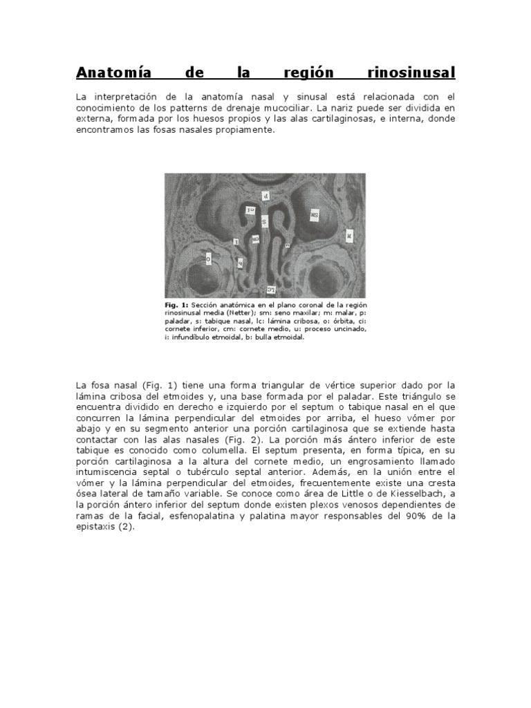 Anatomía de la región rinosinusal