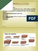 Anatomia Dental Completa