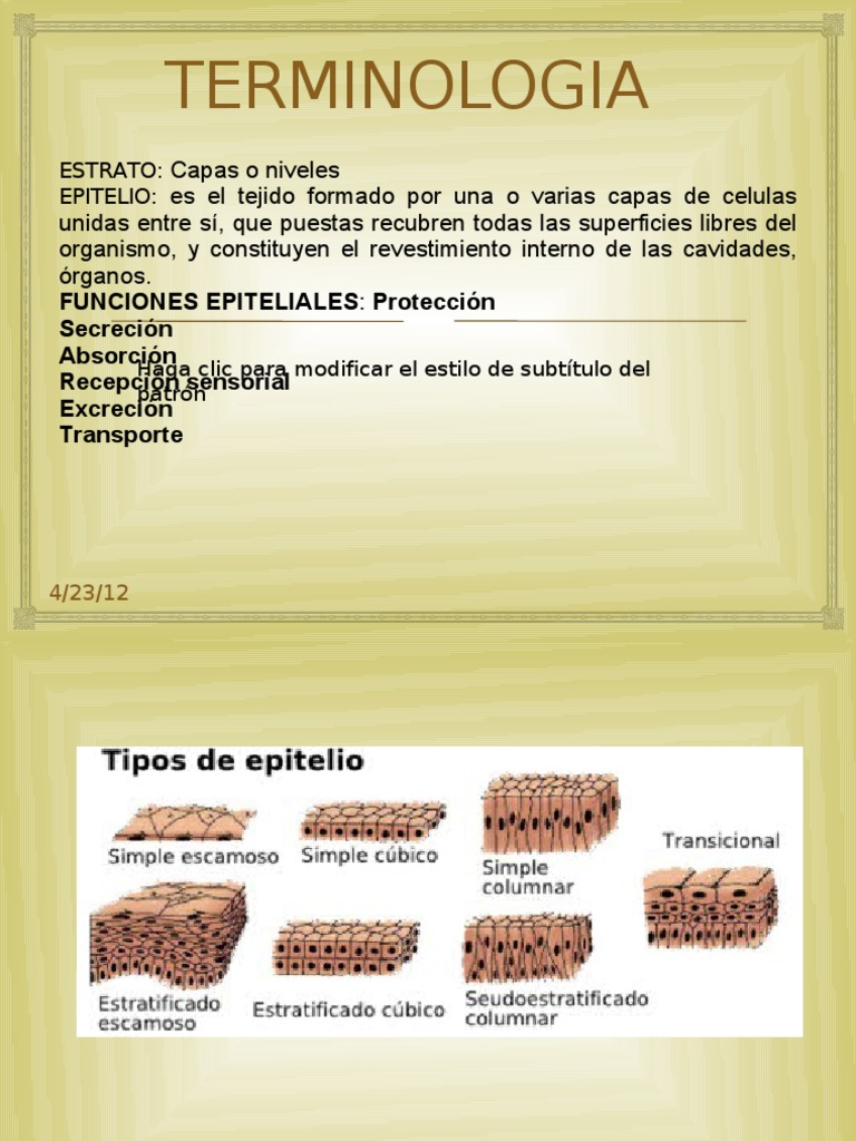 Anatomia Dental Completa