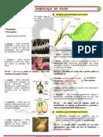 Morfologia Da Folha Pelo Biovest