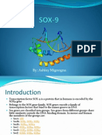 SOX-9 Gene Project