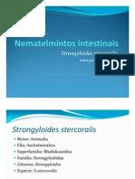 strongyloides stercolaris