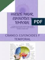 Hueso Esfenoides Malar y Temporal