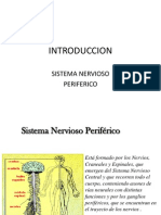 4 1 Sistema Nervioso Periferico Ppt