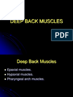 KUMC 09 Deep Back Muscles Student