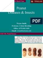 Peanut.10.4.Diseases and Insects