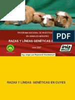 RAZAS Y LINEAS GENETICAS EN CUYES www.peru-cuy.com