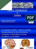 nervioscranealesdefinitiva1autoguardado-100616234624-phpapp01
