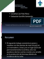 Presentacion Final_plantas de Maiz