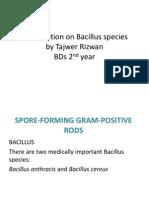 Presentation on Bacillus Species