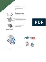 Proteína estructural