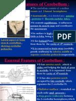 10 Cerebellum