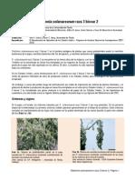 Ralstonia arum ES PDF