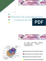 evaluación especializaciones de membrana