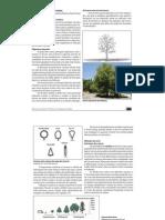 10_manutenção de árvores
