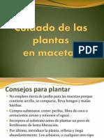 Cuidado de Las Plantas ()