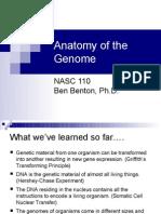 Nasc 110 Genome-2