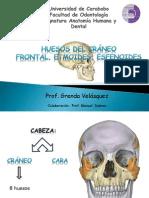 1 Huesos Del Craneo1