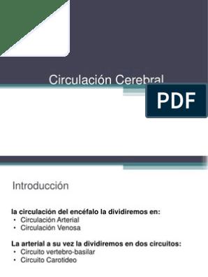 circulacion del cerebro pdf