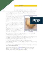 Peritoneo 1
