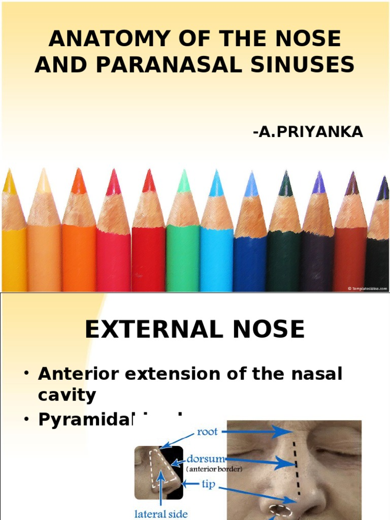 Anatomy of the Nose and Paranasal Sinuses | Human Head And Neck ...