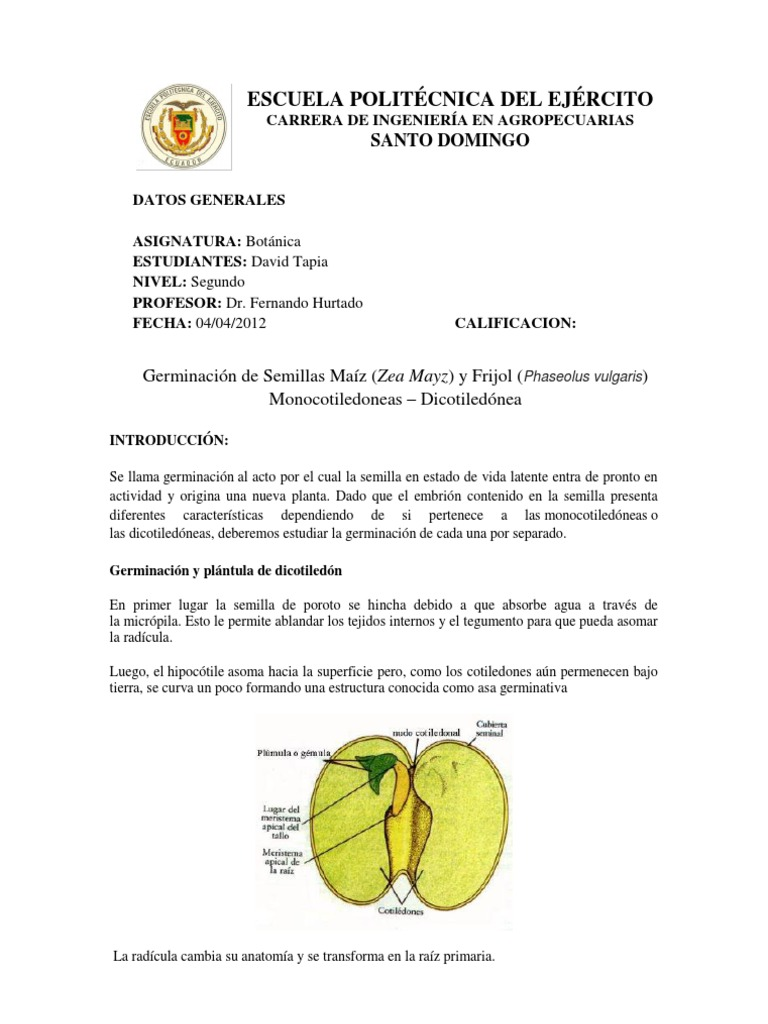 Moderno Anatomía De Una Semilla De Frijol Ornamento - Anatomía de ...