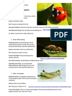 Insect Investigation