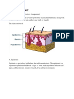 skin histology.docx