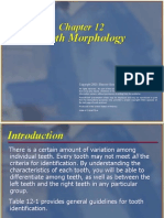 Tooth Morphology