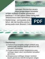Glomerulonefritis Akut (GNA)