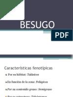 BESUGO