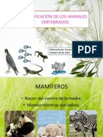 Clasificación de animales vertebrados