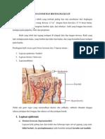 Anatomi Dan Histologi Kulit