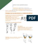 Ejercicios acondicionamiento físico