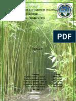Origen del Bambú