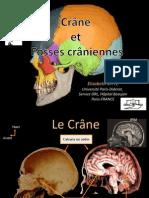 Cranes Et Fosses Craniennes