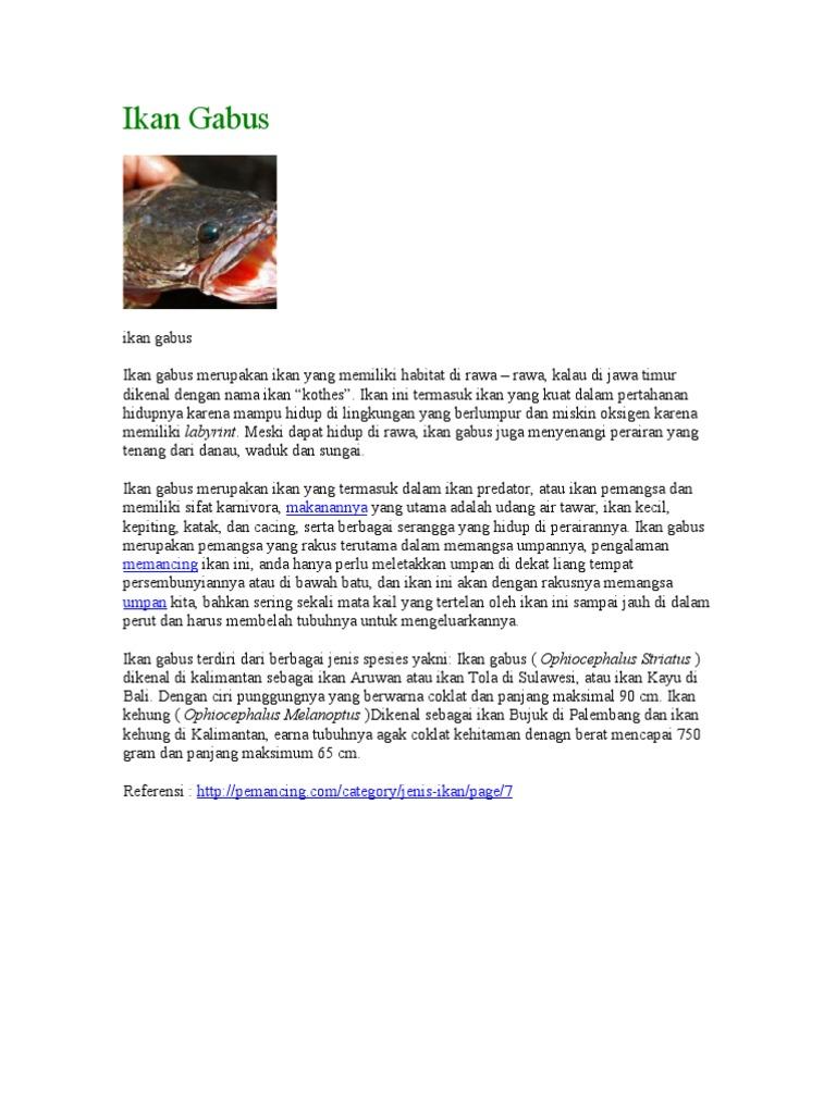 Unduh 88 Gambar Anatomi Ikan Gabus Terbaru
