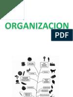 Clase III B_organizacion y Flagelos