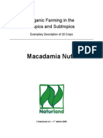 13237397-macadamia