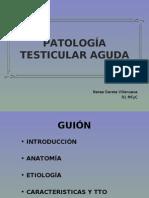 patologc3ada-testicular-aguda-3