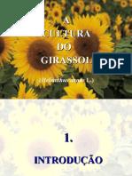 Girassol_2012