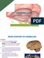 anatomyofcerebellum-100611084355-phpapp01