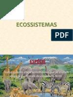 Componentes Dos Ecossistemas