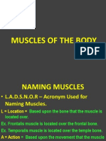 Naming and Identifying Muscles