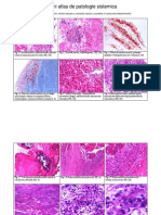 Mini Atlas De Patologie Sistemica