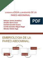 EMBRIOLOGIA y anatomía DE LA PARED ABDOMINAL PERRA