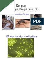Dengue Images 2