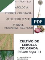Cultivo de Cebolla Colorada1.Pptx Crono